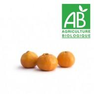 Mandarine Murcott bio