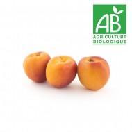 Abricot Robada bio