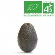 Avocat gros Bio