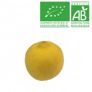 Citron jaune Bergamote Bio