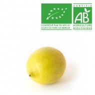 Citron jaune Verna bio