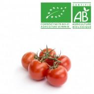 Tomate grappe italienne bio