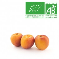 Abricot catégorie 1 Bio