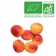 Abricot Big red